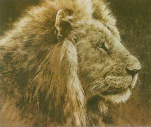 bateman lionhead
