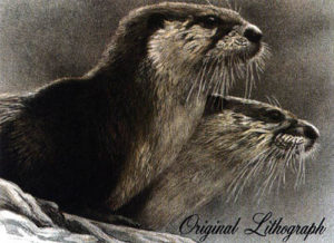 otters lithograph
