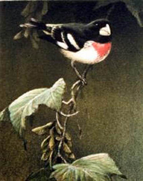 small bird on branch painting