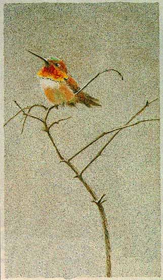 bateman painting rufus hummingbird