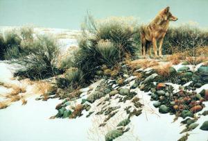 bateman wolf on rocks