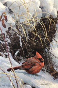 bateman winter cardinal