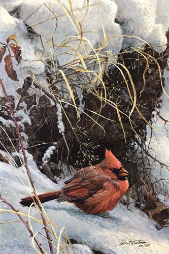 bateman winter cardinal